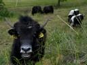 Natur und Wein: Halbwilde Kühe, Ponyreiten und Kinderschminken begeisterte die Kinder.