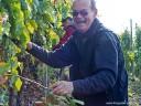 Brackenheim: Auf den feinen Lembergerwein des Jahres 2007 freut sich der Herr Dekan schon bei der Lese.